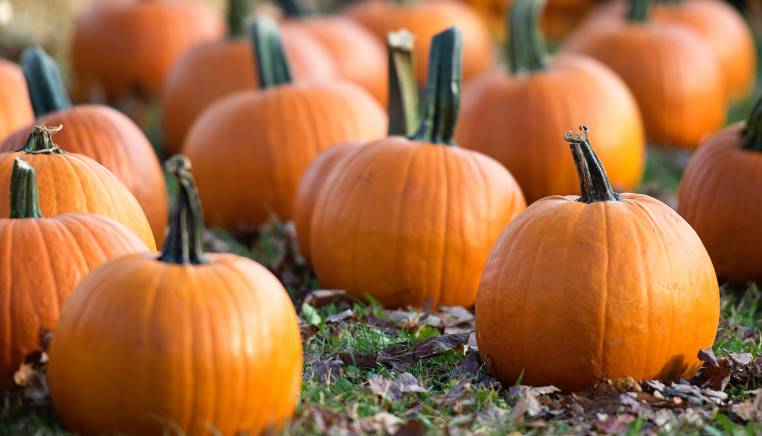 october outlook pumpkins