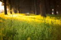 Forest ESG