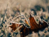 Frost, November Investment Outlook