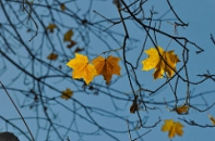 Sept Investment Outlook papers autumn leaves