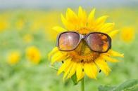 sunflower glasses esg