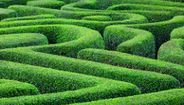 Maze in Green Hedge funds best papers
